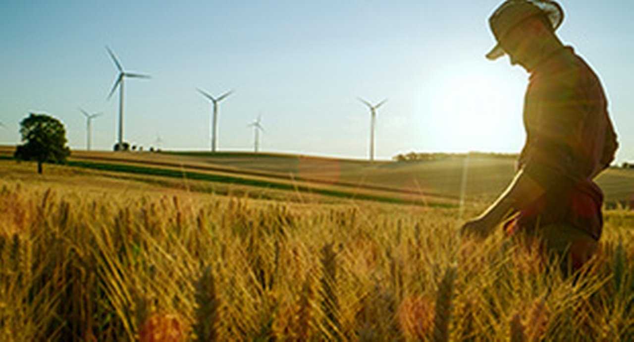 A farmer in a wheat field with windmills in the background